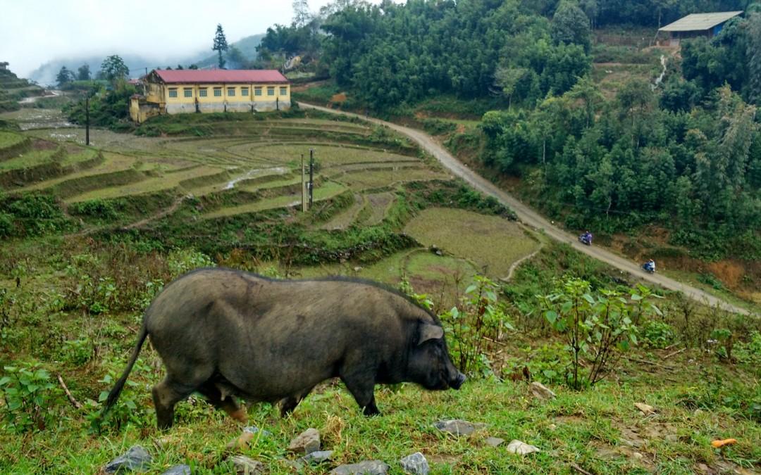 Vietnam, un paraíso algo enlatado. Pero paraíso al fin y al cabo